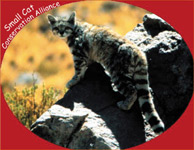 Small Cat Conservation Alliance  logo