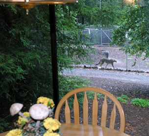 view from the guest house at the Wild Cat Education and Conservation compound